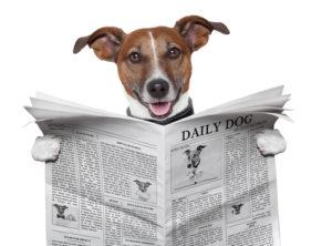 news subscriptions